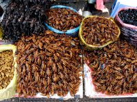 Fried insects, street food at Central Market of Cambodia
